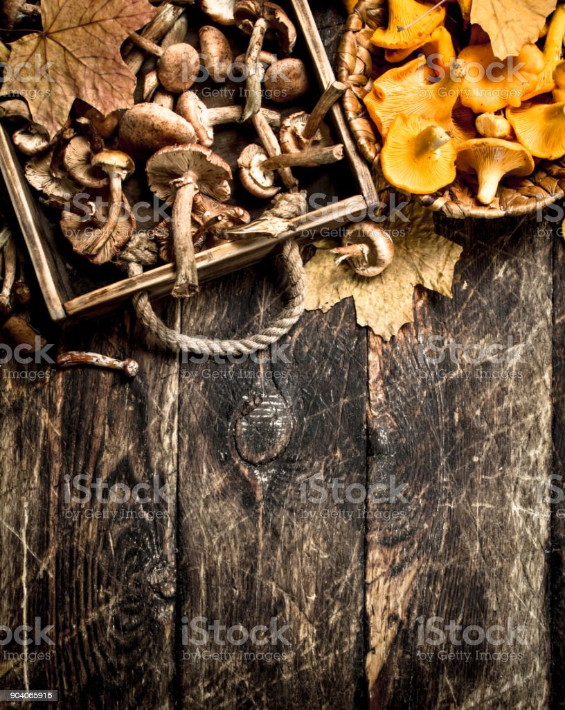 variety of forest mushrooms. stock photo