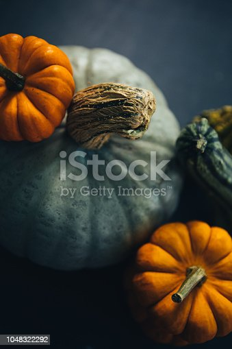 Halloween is coming! Variety of gourd, squash and pumpkin on a dark setting.