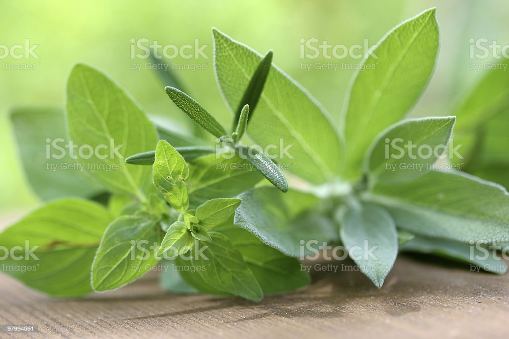 Variety of herbs royalty-free stock photo
