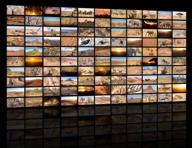 eine vielzahl von bildern von namibia als großes bild wand - dokumentation stock-fotos und bilder