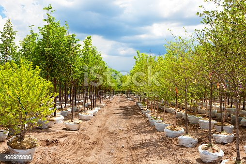 Variety of tree seedling plants displayed in a garden center retail store and tree nursery.