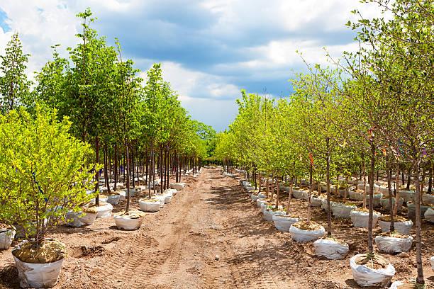 Diversité de paysages de Jeune plant arbres affichage de garderie Garden Centre - Photo