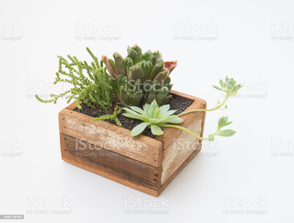 Variety of little Succulents plant in wooden pot stock photo