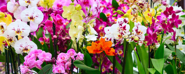 Variety of many different orchid flowers banner stock photo