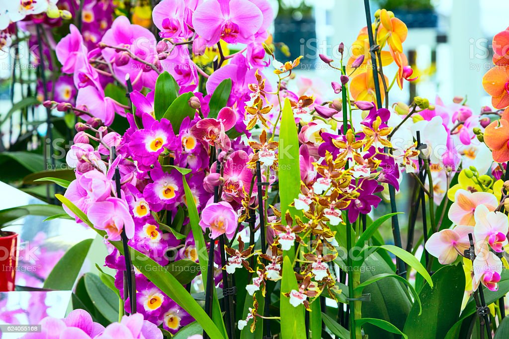 Variety of many different orchid flowers stock photo