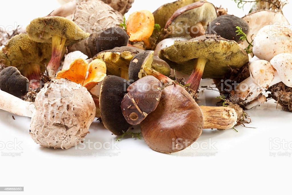 Variety of mushrooms on white background, close up stock photo