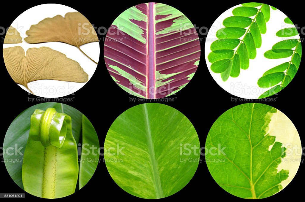 Variety of plant  leaves stock photo