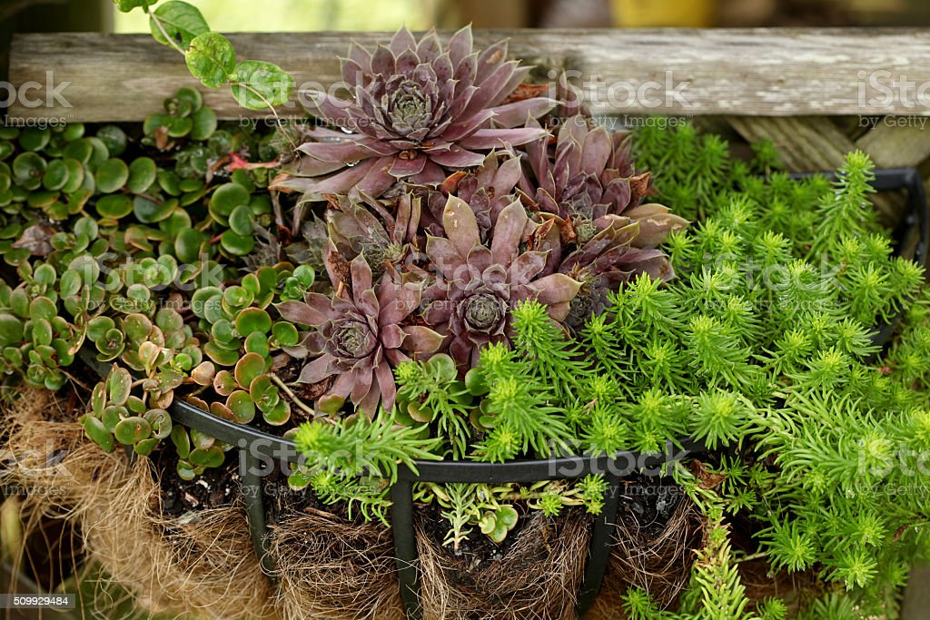 Variety of plants in a planter stock photo