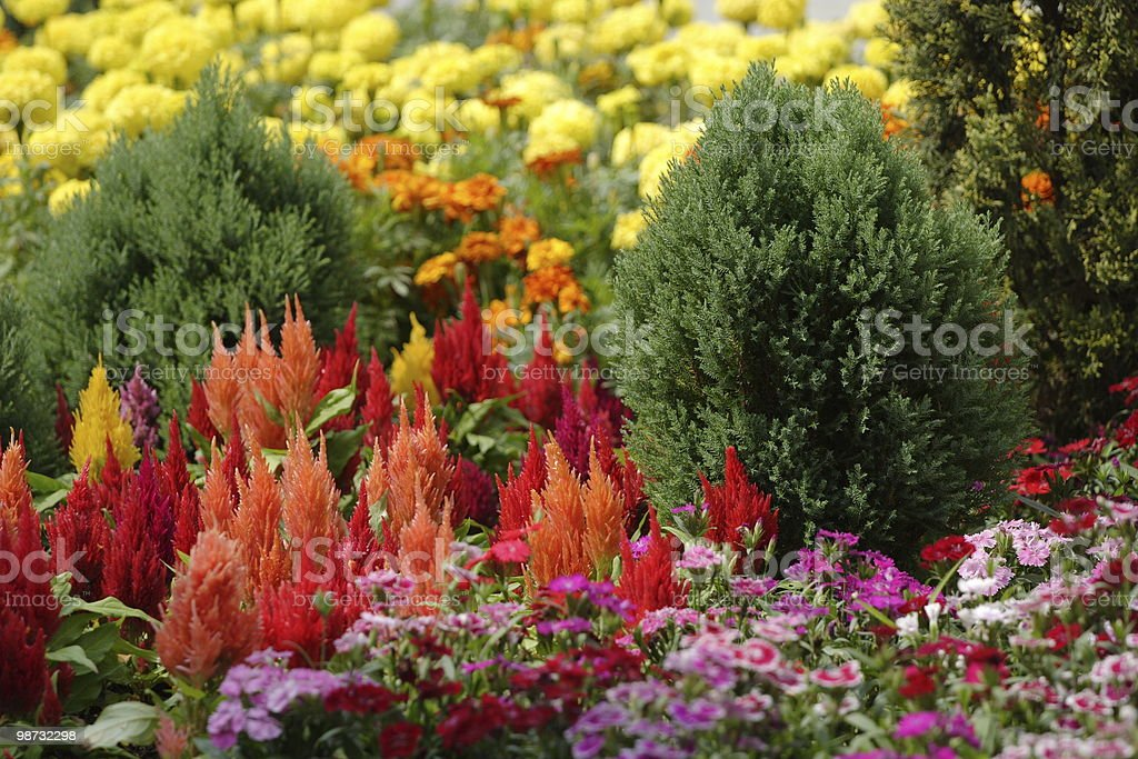 Variety Of Plants royalty-free stock photo