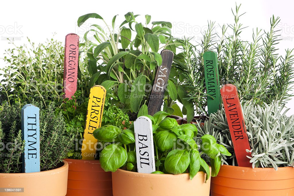 variety of potted garden herbs, closeup stock photo