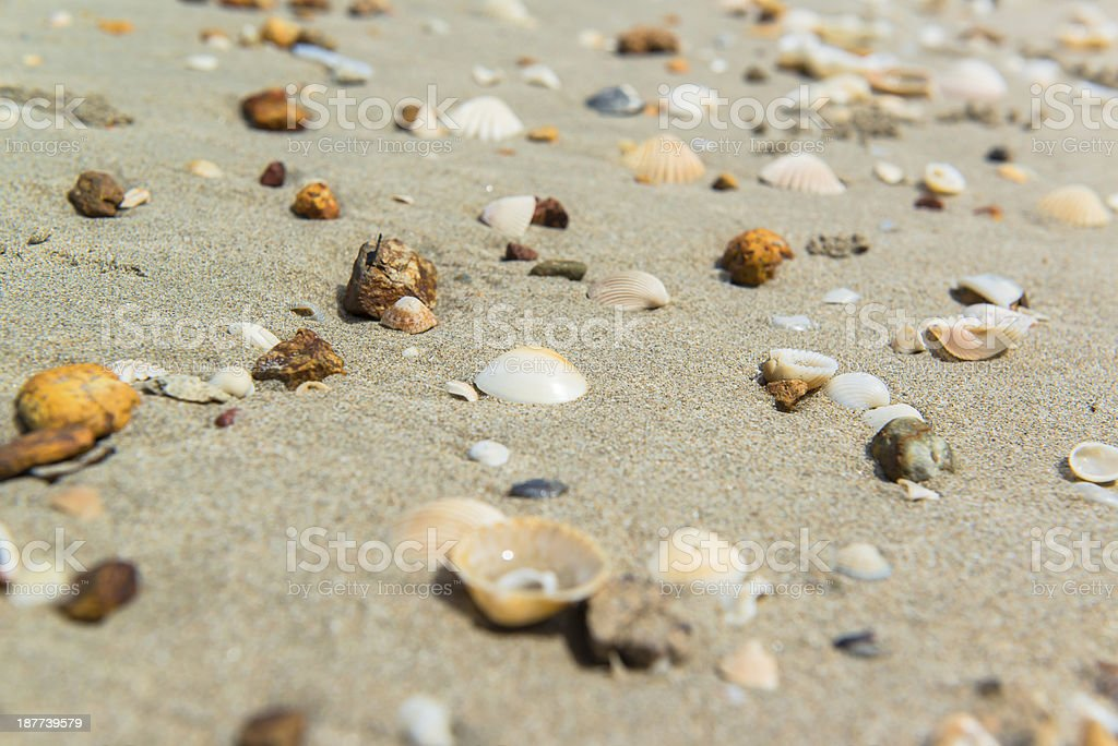 Variety of sea shells on the sand beach royalty-free stock photo