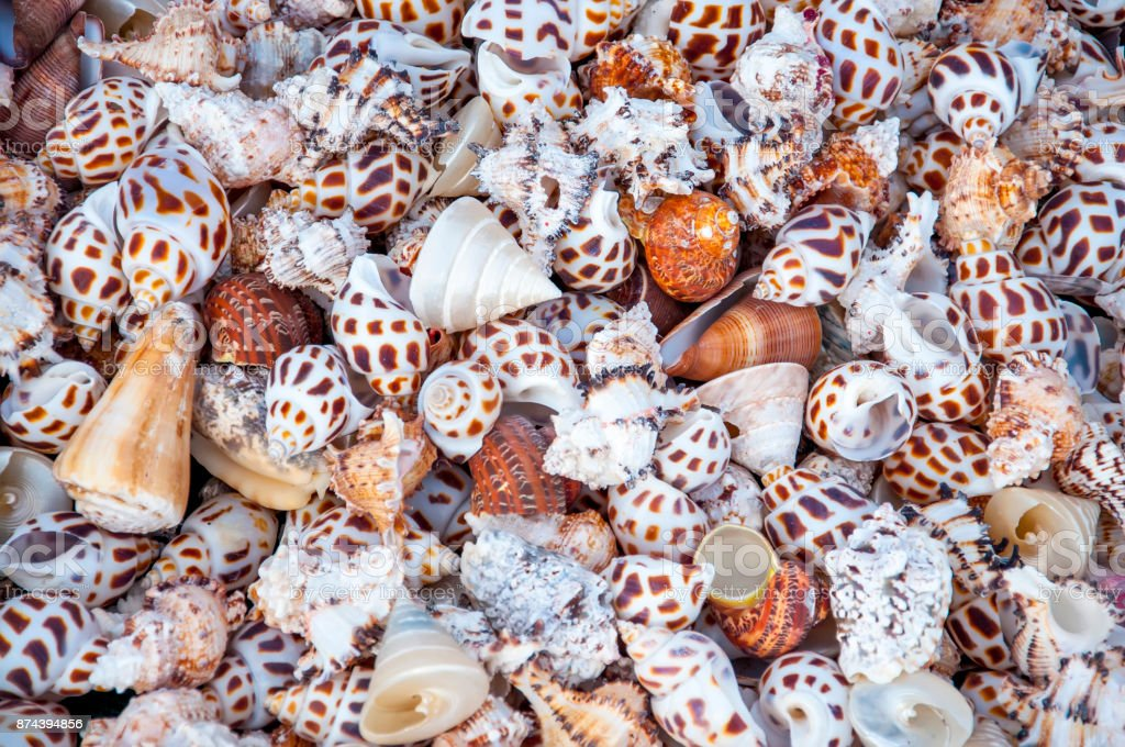 A variety of shells stock photo