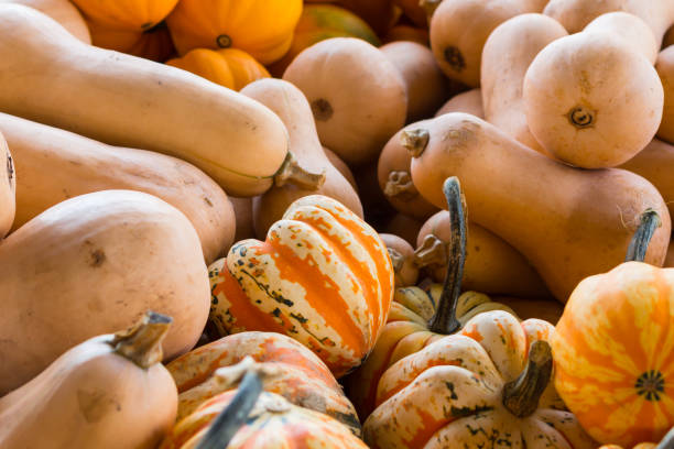 Variety of Squash in Market stock photo