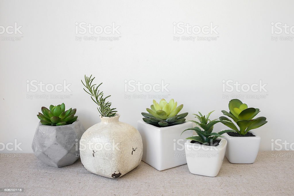 Variety of Succulent in pots, home decoration stock photo