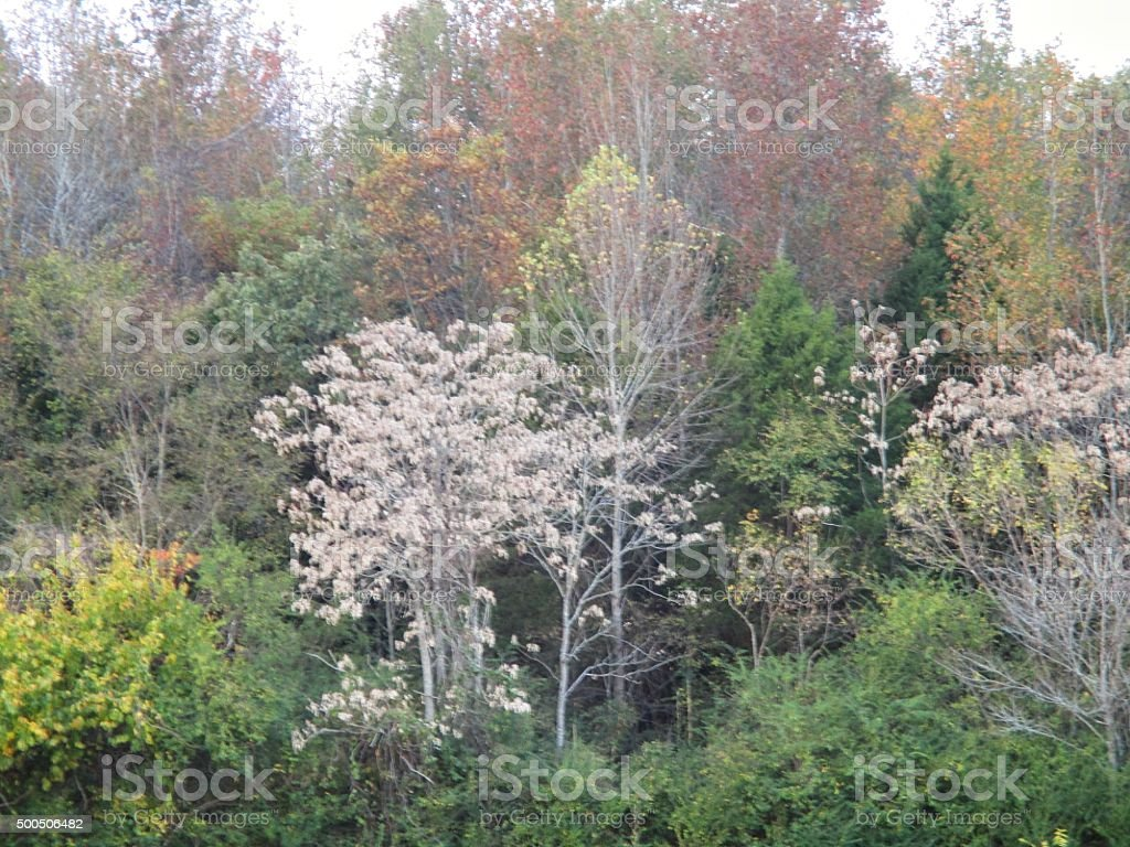 Variety of Trees in the Fall Along a Rural Road stock photo