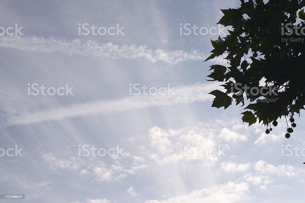 Summer sky graffiti and plane tree Platanus x acerifolia stock photo