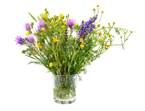 Variety of wild flowers in a glass Variety of wild flowers in a glass isolated on white background. wildflower stock pictures, royalty-free photos & images