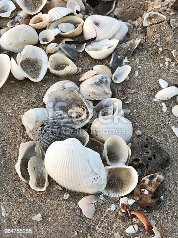 istock Variety seashells on the sand. 984785288