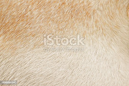 istock Varigated dog hair fur background 498984540