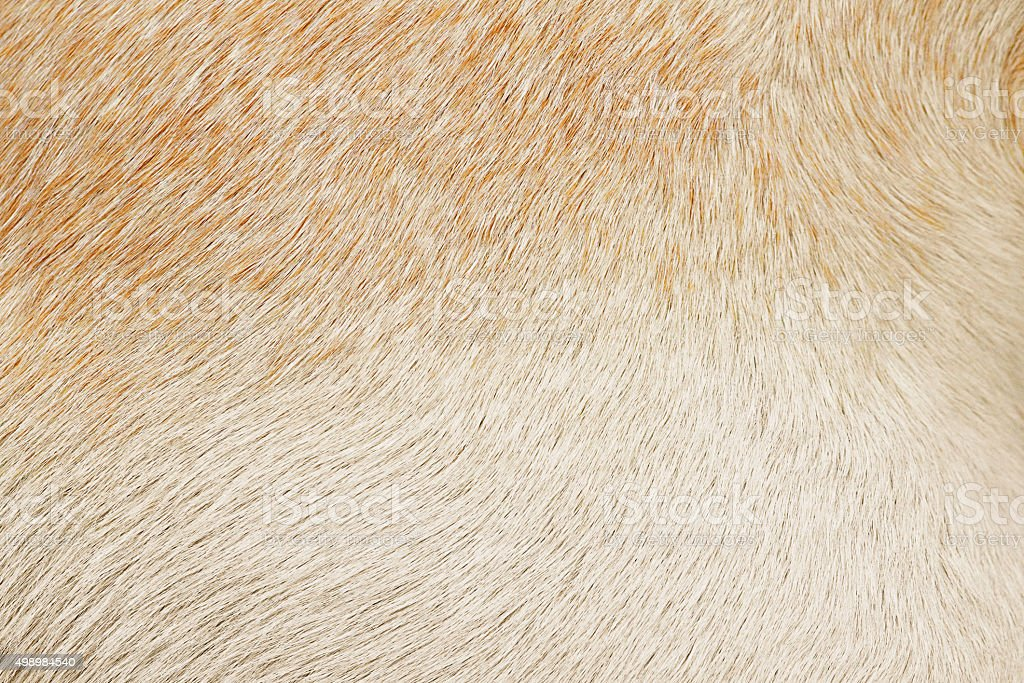 Varigated dog hair fur background stock photo