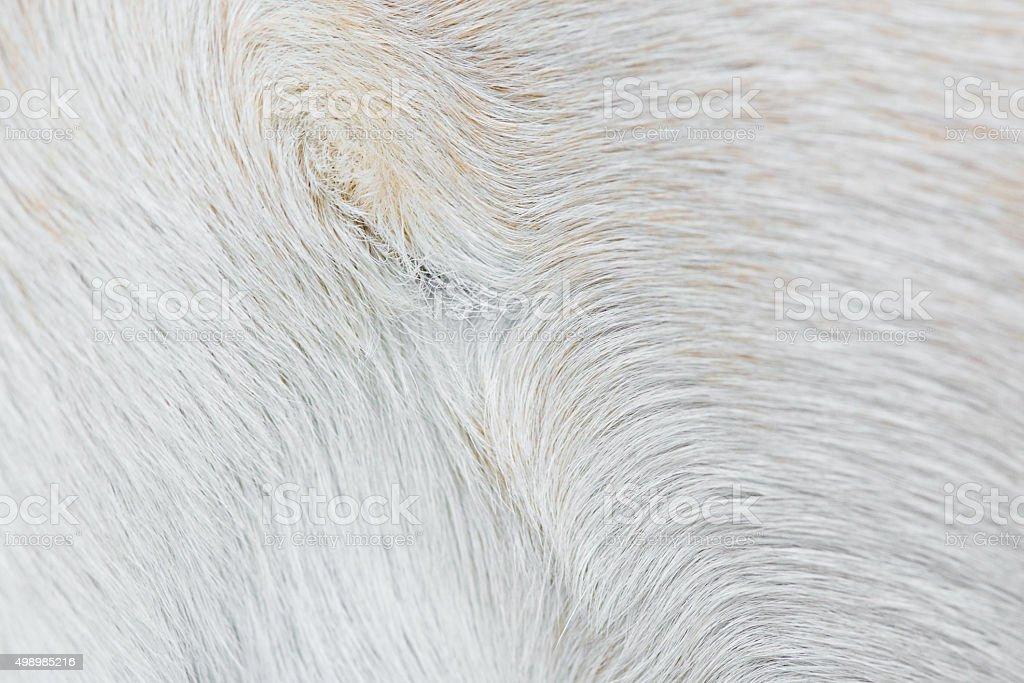 Varigated dog hair fur background stock photo