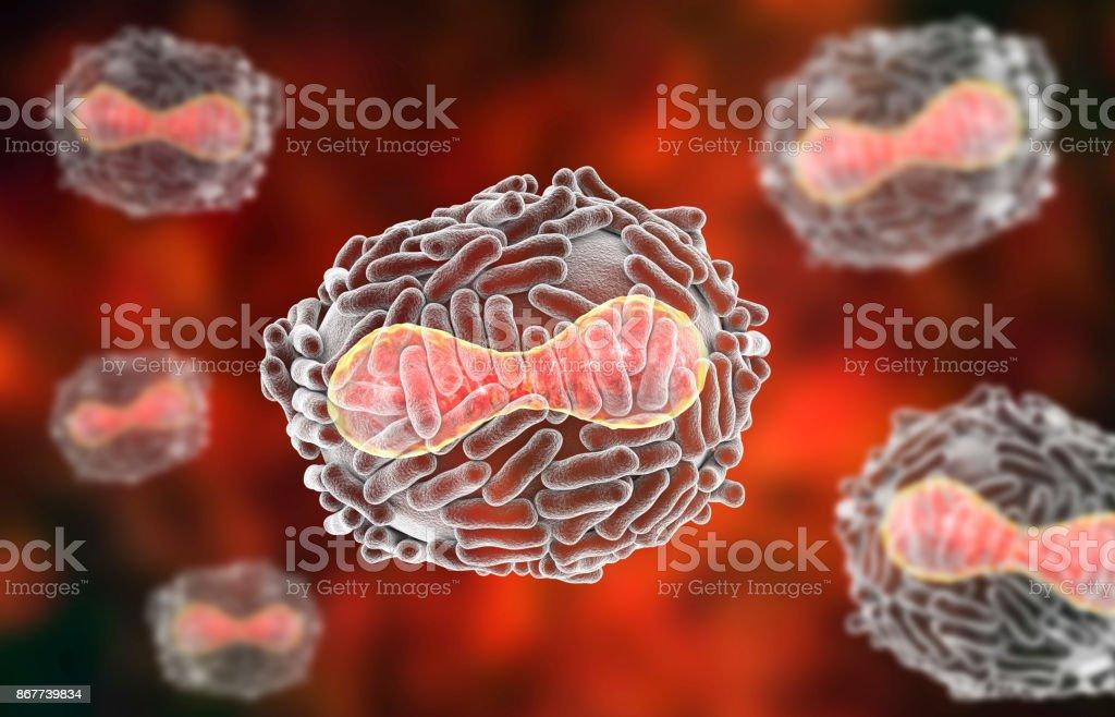 天然痘ウイルスの図 - 3Dのスト...