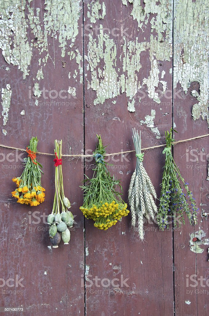 varions plants and medical herb bunch on old wooden cracked farm wall