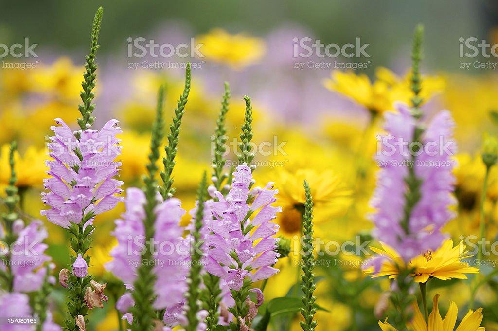 various autumn flowers royalty-free stock photo