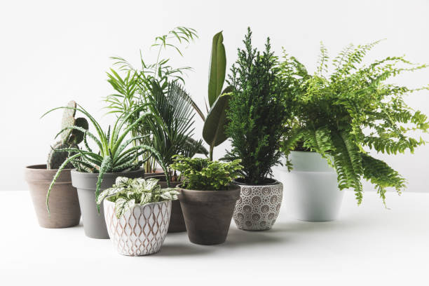 various beautiful green plants in pots on white stock photo