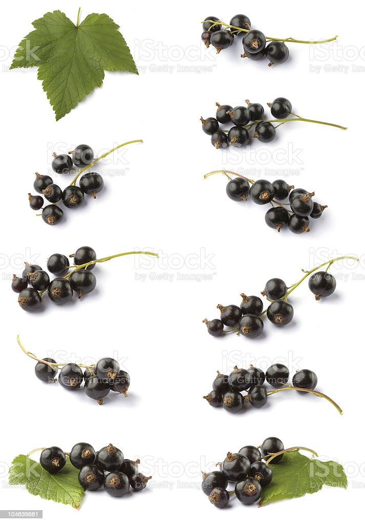 Various blackcurrant stock photo