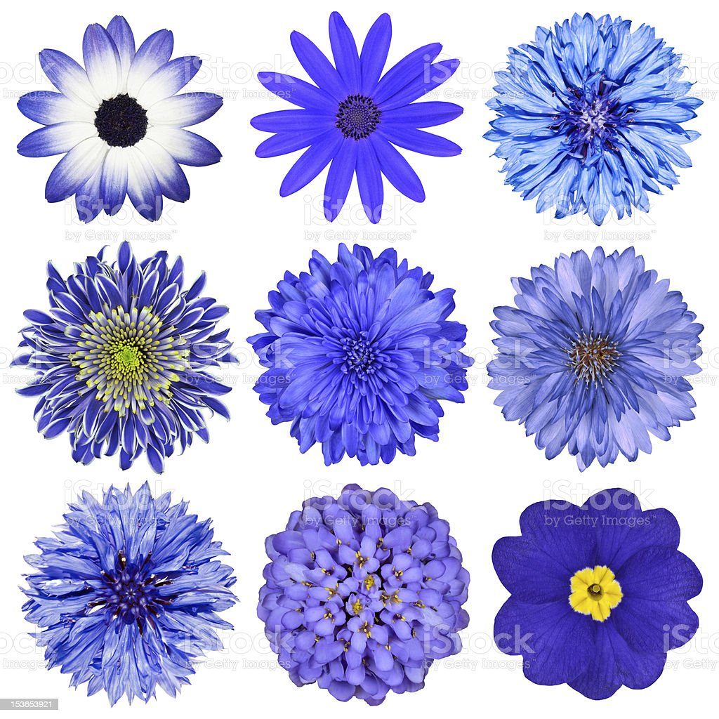 Various Blue Flowers Selection Isolated on White stock photo