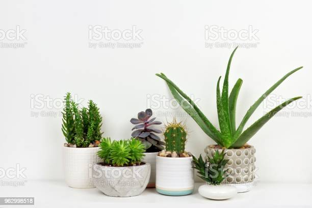 Photo of Various cacti and succulents in pots on shelf against white wall