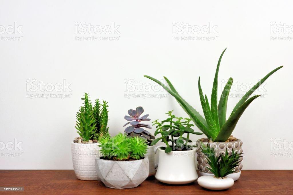 Houten Planken Tegen De Muur.Diverse Cactussen En Vetplanten In Potten Op Houten Plank Tegen De