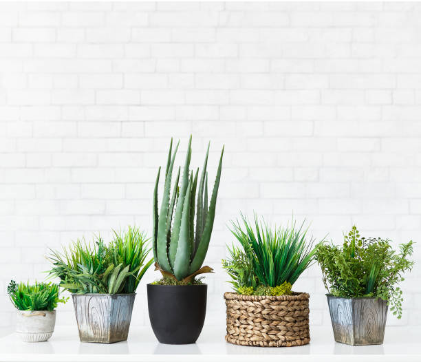 Various cactus and succulent plants in pots, free space Various cactus and succulent plants in pots against white brick wall, crop, free space houseplant stock pictures, royalty-free photos & images