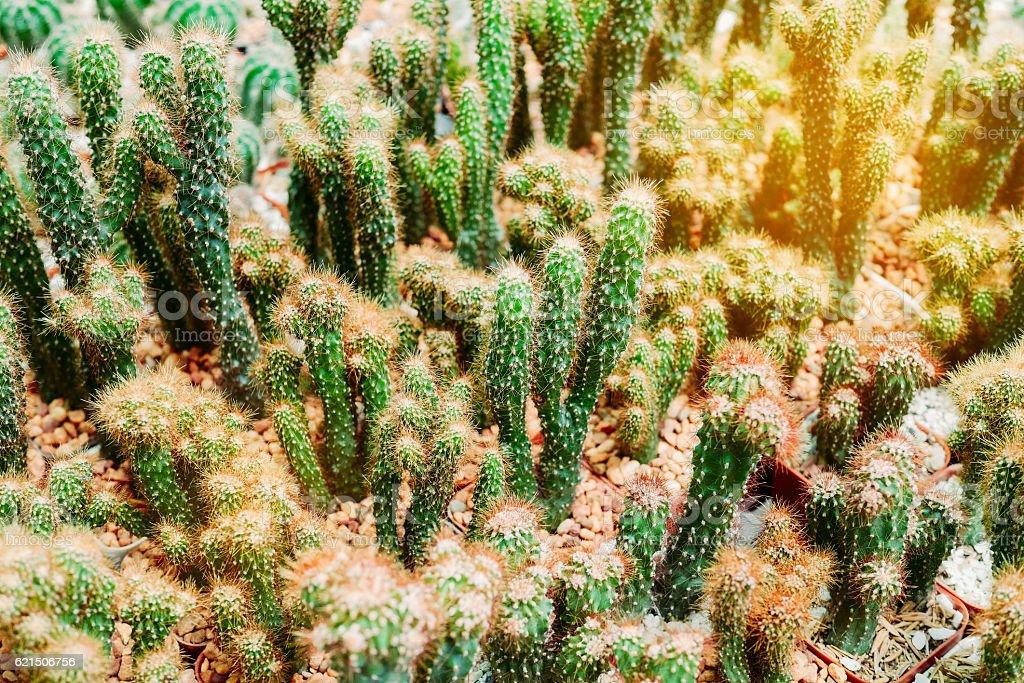 Various cactus plants Group of cactus in the pot photo libre de droits