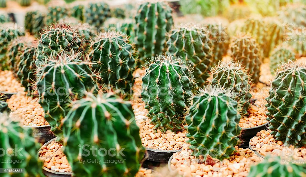 Various cactus plants Group of small cactus in the pot. Lizenzfreies stock-foto