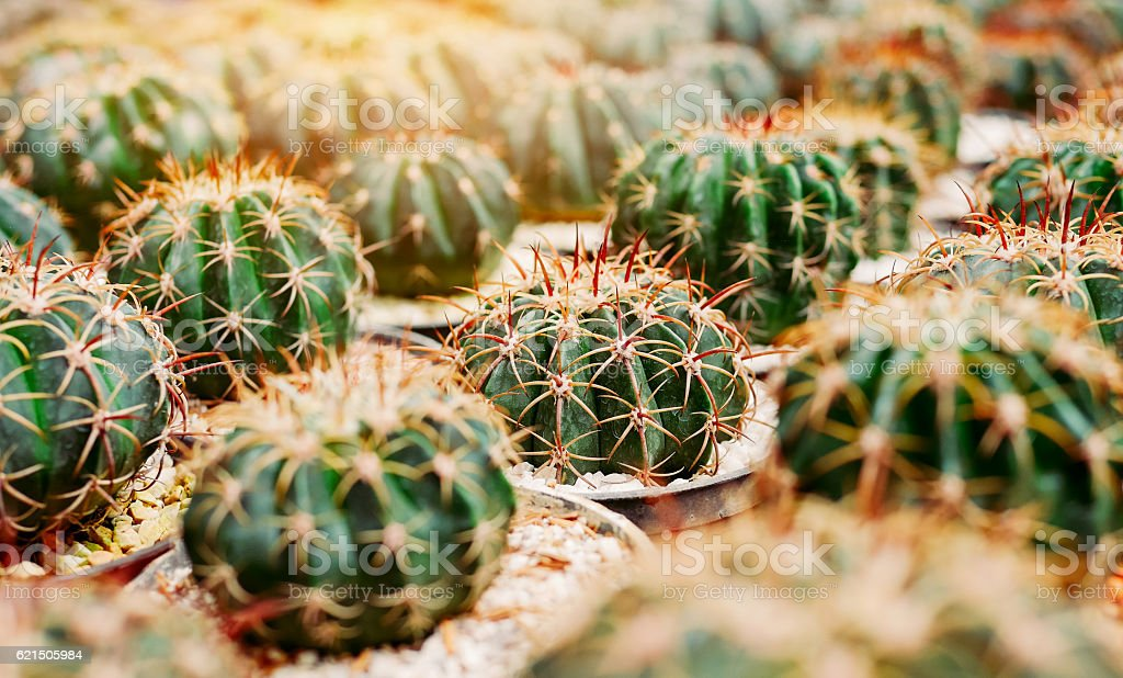 Various cactus plants Group of small cactus in the pot. foto stock royalty-free