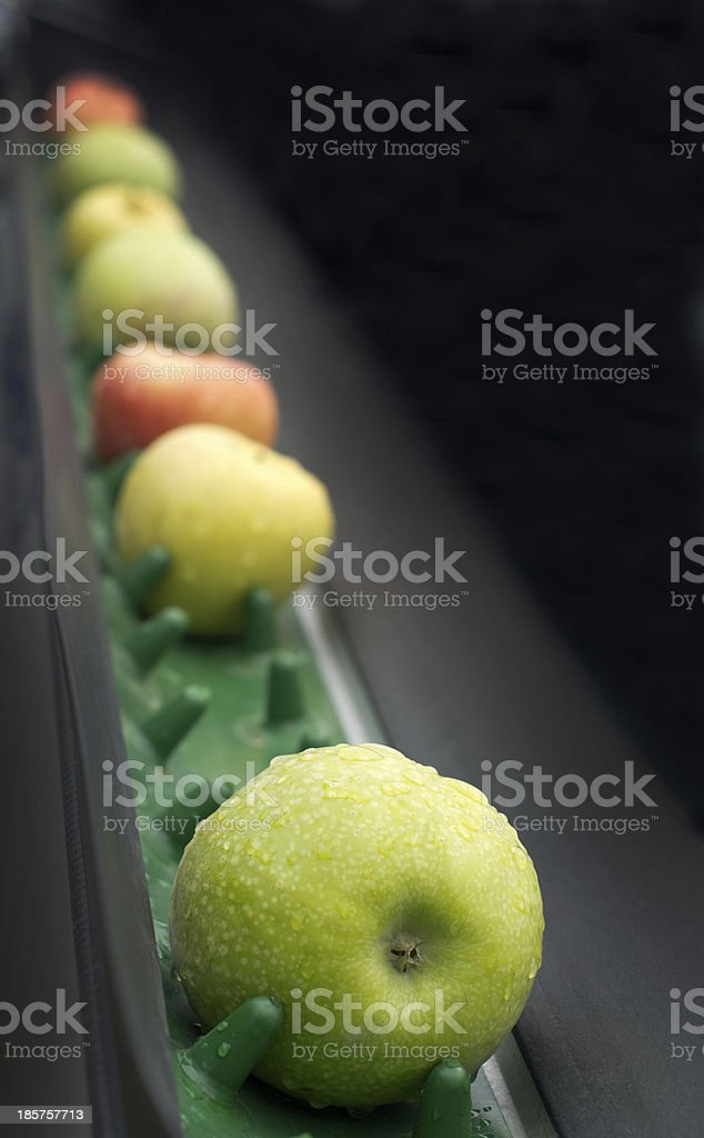 Various colored apples on a drying rack royalty-free stock photo