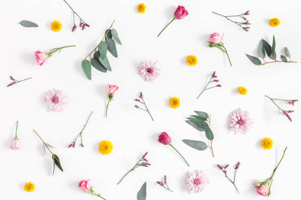 various colorful flowers on white background. flat lay, top view - flowers stock photos and pictures