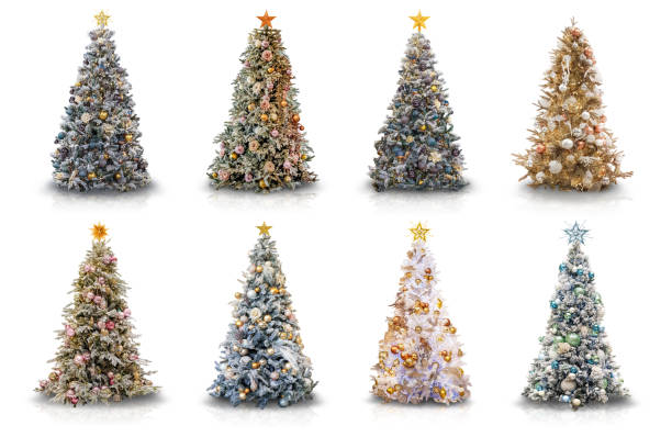Various Decorated Christmas Trees on White stock photo