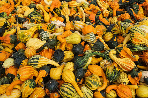 Various decorative gourds stock photo