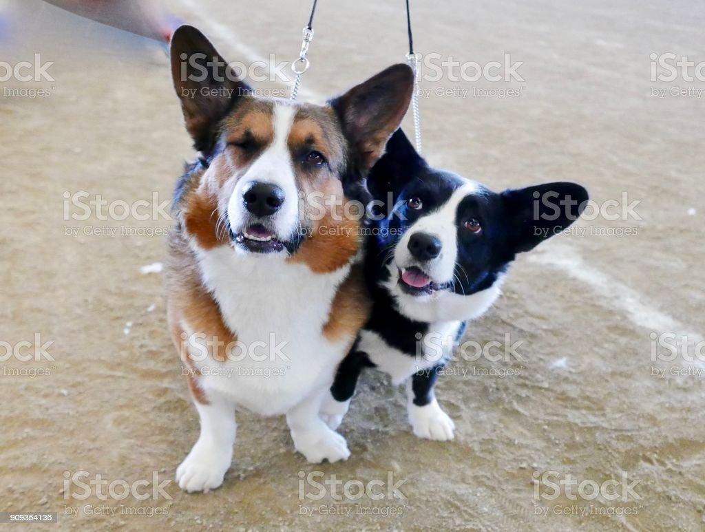 Various Dog Breeds stock photo