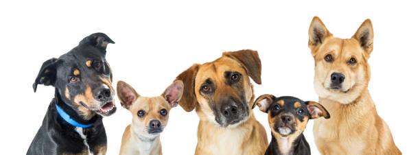 Various Dogs Horizontal Web Banner stock photo