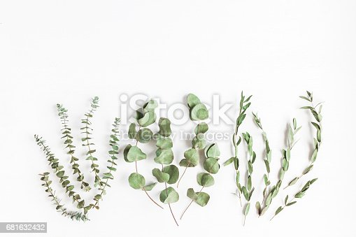 istock Various dried eucalyptus branches on white background. Flat lay 681632432