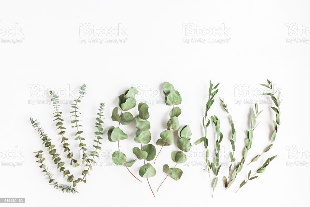 Various dried eucalyptus branches on white background. Flat lay stock photo
