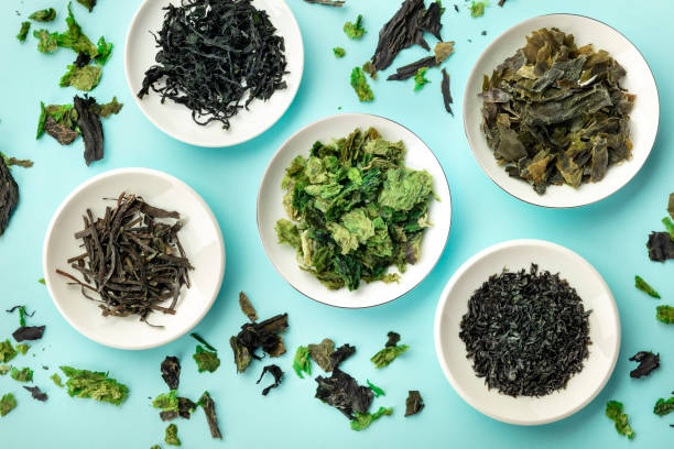 Various dry seaweed, sea vegetables, shot from above on a teal background stock photo