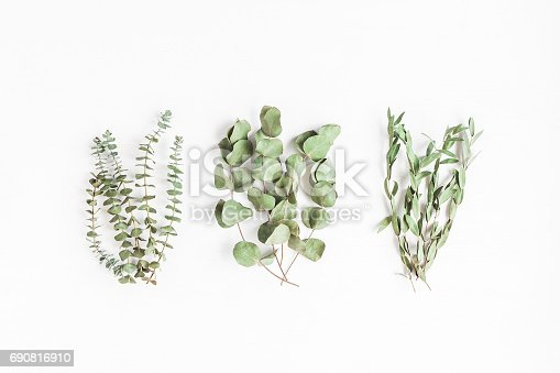 istock Various eucalyptus branches on white background. Flat lay, top view 690816910