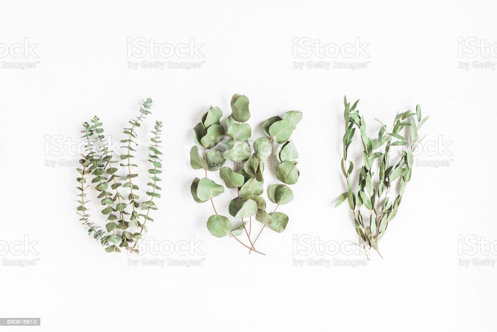 Various eucalyptus branches on white background. Flat lay, top view stock photo