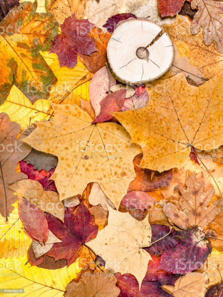 various fallen autumn leaves and sawed wood stock photo