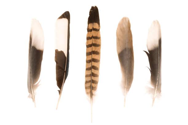 various feathers - hair line surface stock photos and pictures